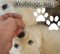 wolfdogg.org banner - two pure white mal cubs look like polar bears, with pawprint