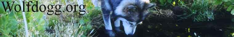 Alyeska at Wolfdogg.org
